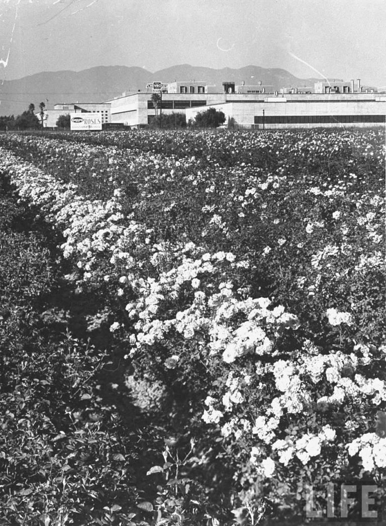 GM Plant on Van Nuys Blvd (circa 1950)