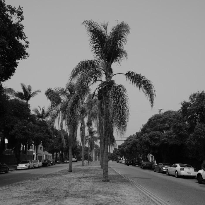 Palm Tree, Santa Monica